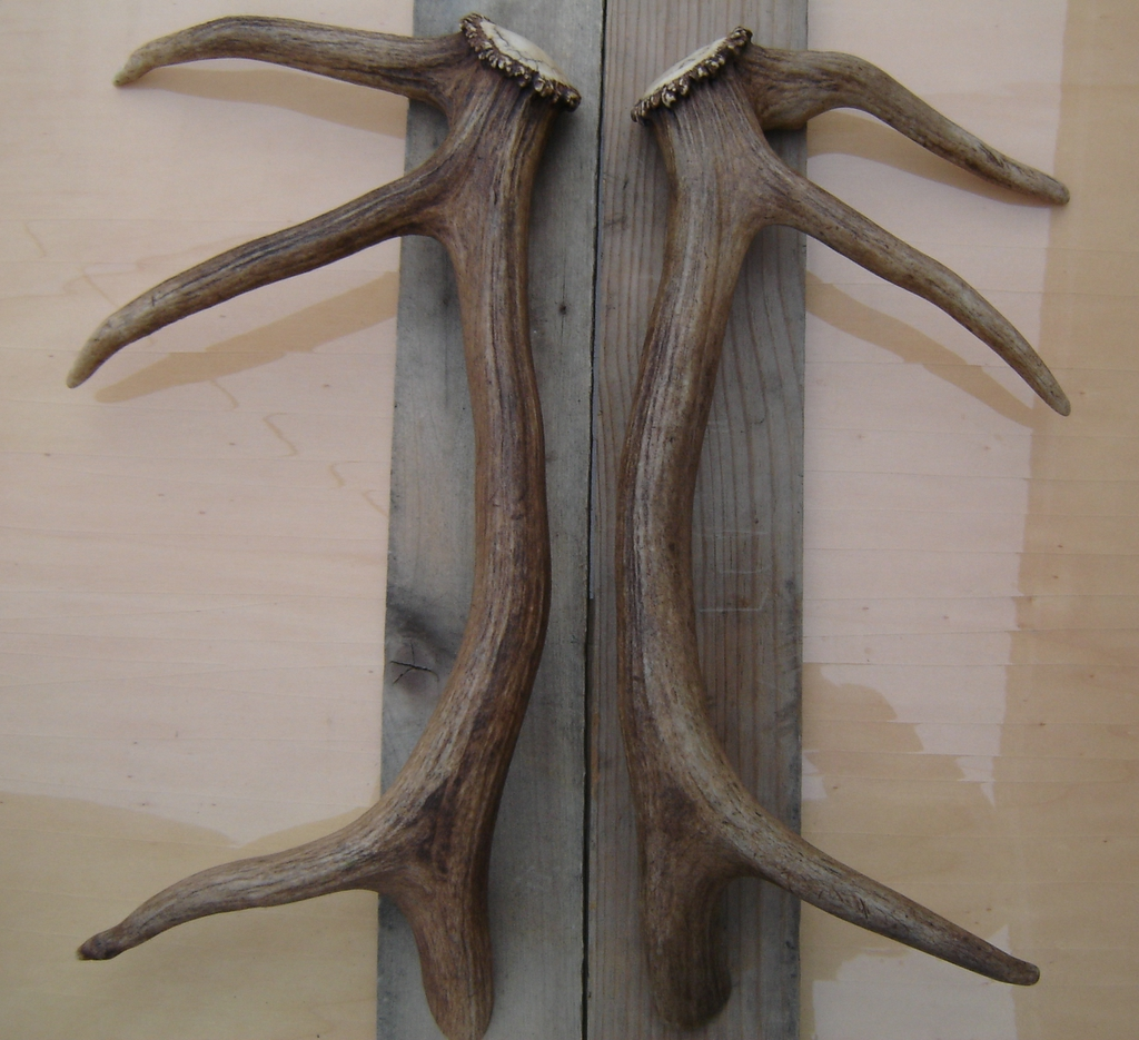 the antler cabinet handles and knobs deer